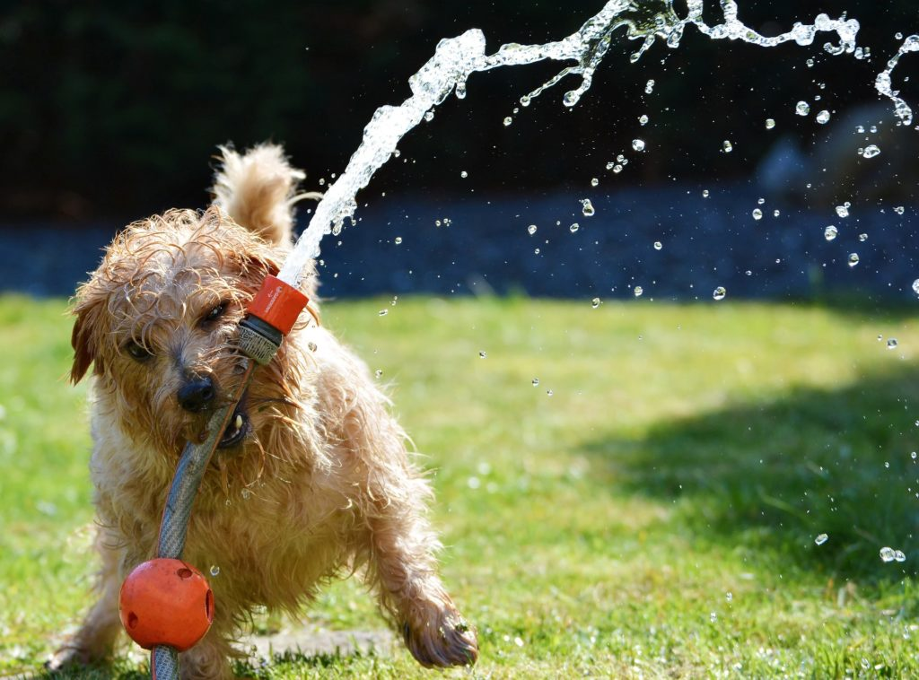 Dog having fun in the garden