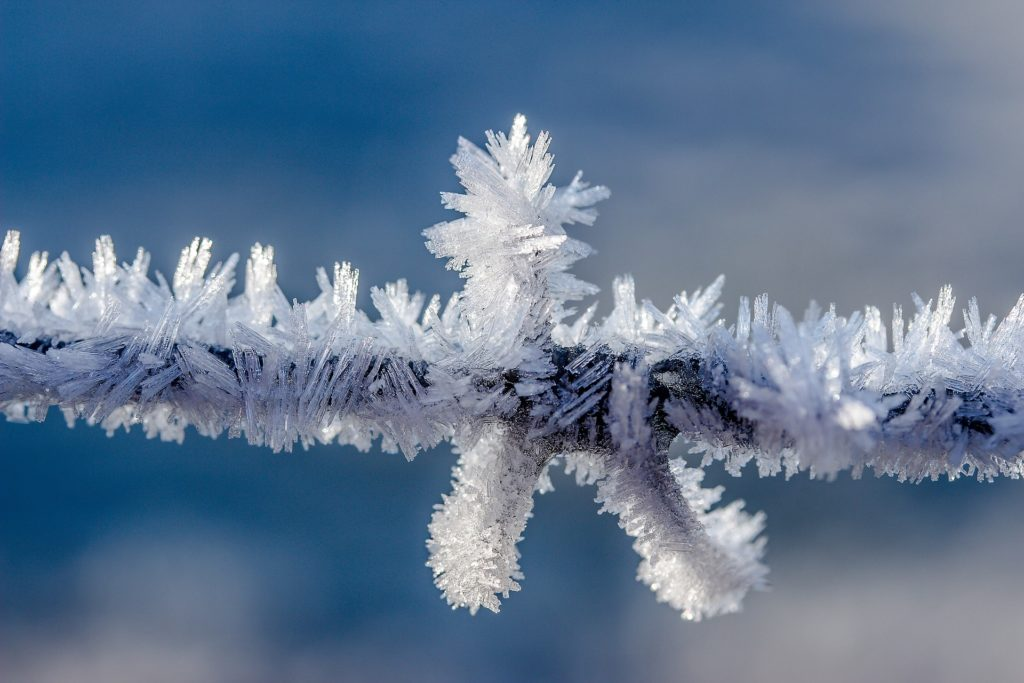 Twig with beautiful frost crystals