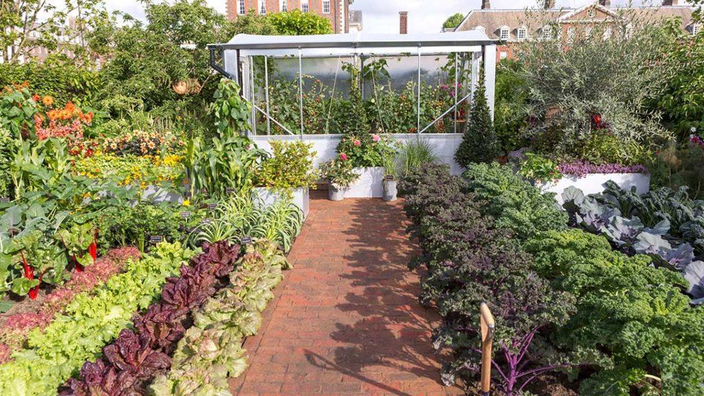 Chris Evans vegetable garden