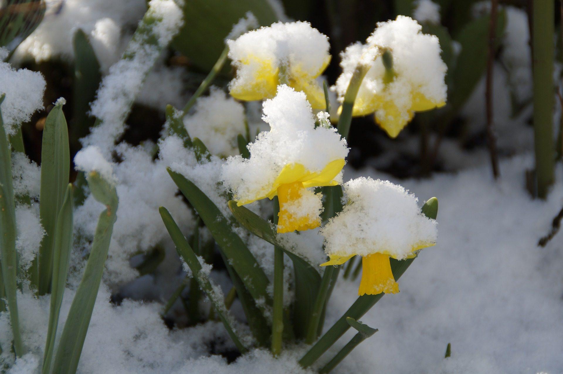 snow on flowers